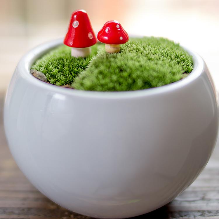 грибы/фея 2шт/красный сад gnome/Мосс террариум домашний