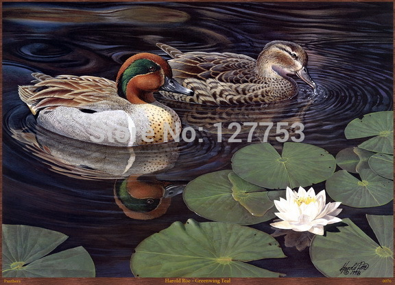 HD Animal Oil painting pictures print on the canvas wall decoration Mandarin duck picture Harold Roe - Greenwing Teal 84(China (Mainland))