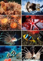 [EIGHT] Postcard /Greeting Cards Wholesale (8 pcs/set; 10 sets/lot) Underwater world /For postcrossing