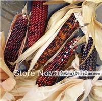 Color corn seed, hybrid corn, grain seeds,20pcs