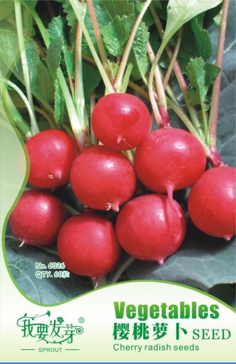Radish Seeds Germination Germinated Red Radish