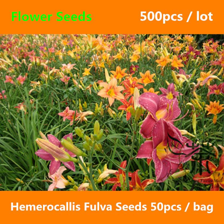 Tawny Daylily Hemerocallis Fulva Seeds 500pcs, Ornamental Plant Orange Daylily Flower Seeds, Bright Coloured Tiger Daylily Seeds(China (Mainland))