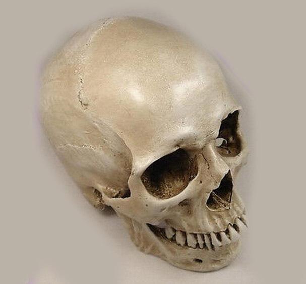product  1: 1 human skull model life size resin skull model art class model medical teaching delicate human skeleton model