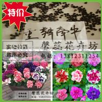 free shipping Petunia petals flower seeds multicolor -220 pcs