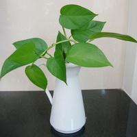 Fashion popular vase fashion flower ceramic vase black and white prints single extra large vase