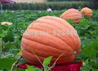 build your garden! 30pcs/lot, happy farm Huge Pumpkin vegetable Seeds FR010