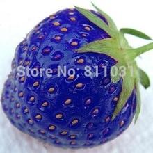 Heißer verkauf 100pcs/bag blau Erdbeere selten obst gemüse samen bonsai Anlage zu hause Garten frei versand(China (Mainland))