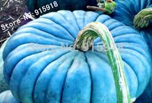 Vegetable seeds 20pcs Perennial Rare Ornamental edible Blue Jarrahdale Pumpkin seed exotic Blue grey Coloring DIY home gardening(China (Mainland))