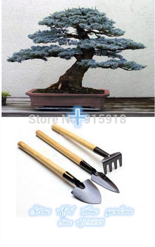 Карликовое дерево Bonsai001 100 + /1 = 3 Sppittle seeds001 карликовое дерево china seeds dionaea muscipula
