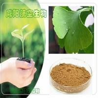 200g[Discount] 100% Natural Ginkgo biloba Leaf Extract 20%