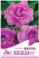 Flower seeds, purple camellia Impatiens seeds, purple impatiens - 20 particles