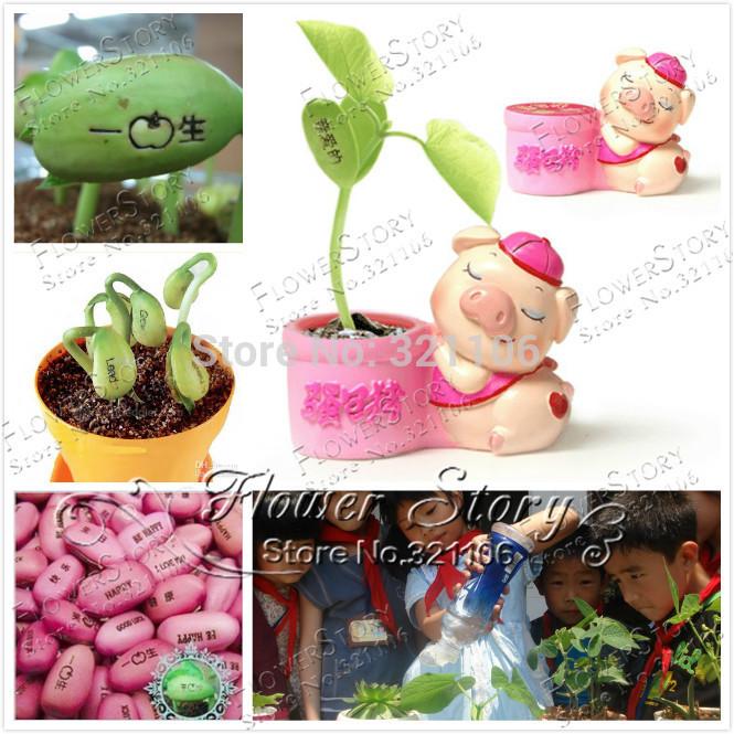 Hot selling 1 Jackbean seed - magic beanstalk beans plants bonsai seeds DIY home garden original packing B051(China (Mainland))
