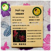Salvia farinacea, vanilla romantic pink and purple - about 20 seeds/bag