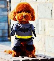 Cool Batman Dog Cat Change Clothes Pet Pubppy Warm Clothes Cat Pet products