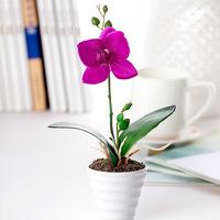 Free shipping cute 1 set  vase + Phalaenopsis artifial flower silk flower for home decoration 4 colors flower set