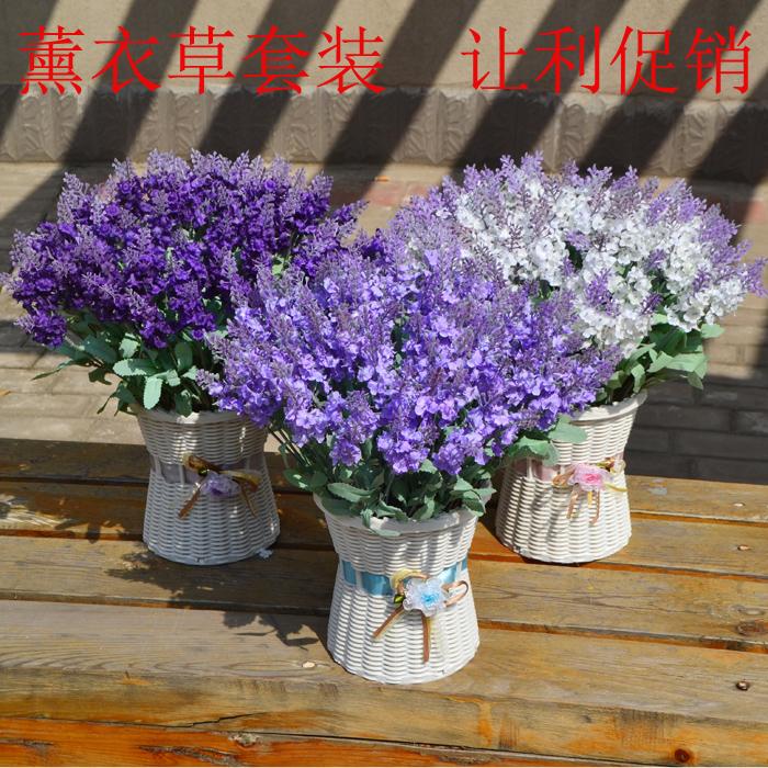 온라인 구매 도매 화분에 심은 라벤더 중국에서 화분에 심은 ...