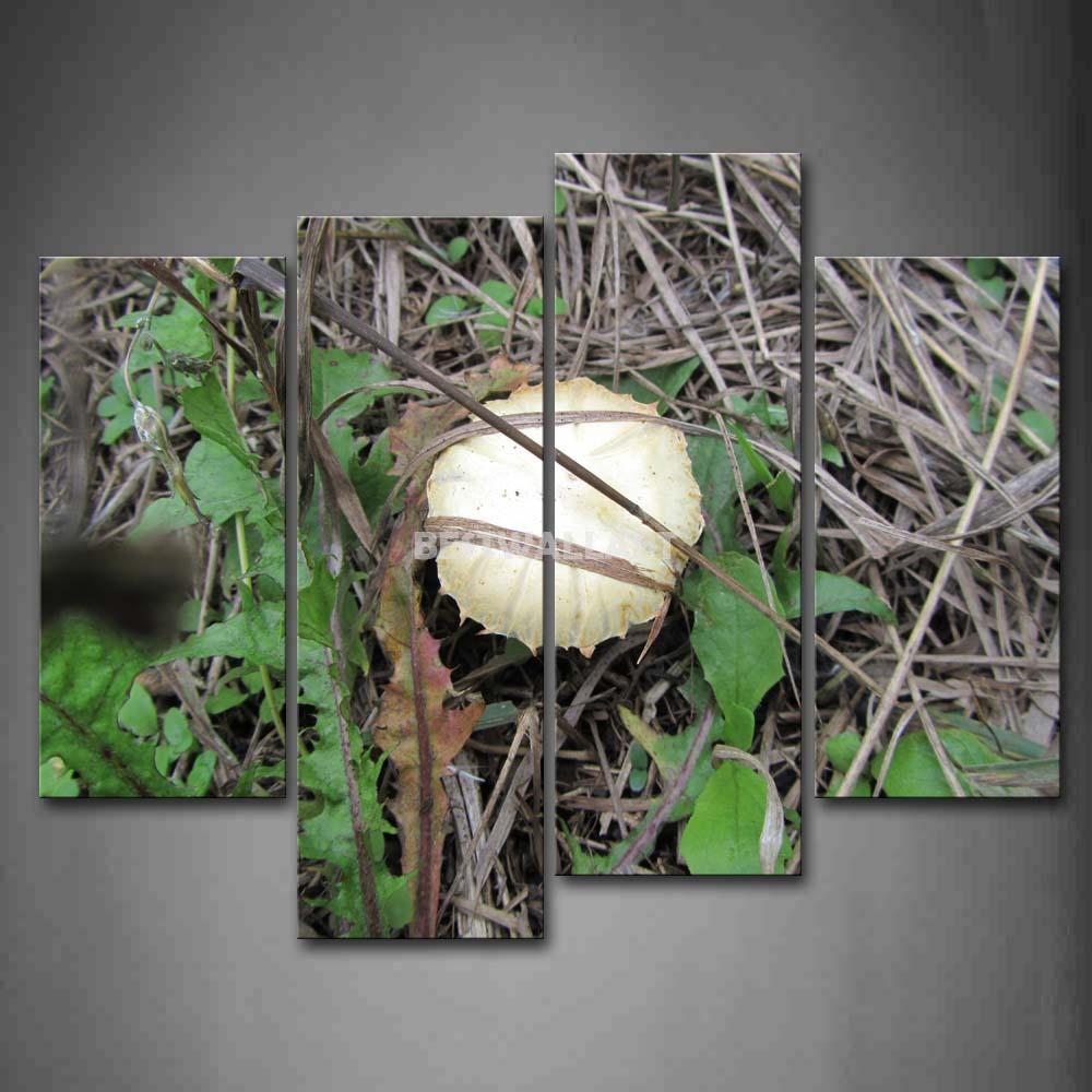 Cogumelo branco com grama verde 4 peça pintura em Canvas Wall Art imagem imprimir botânico 3 5 a imagem(China (Mainland))