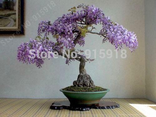 Карликовое дерево Bonsai 001 15 DIY , seeds 001 карликовое дерево seeds vegetables 15