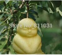 20PCS/LOT rare baby ginseng seed pear tree bonsai interesting herb ginseng sapodilla fruit sementes Botanical Garden(China (Mainland))