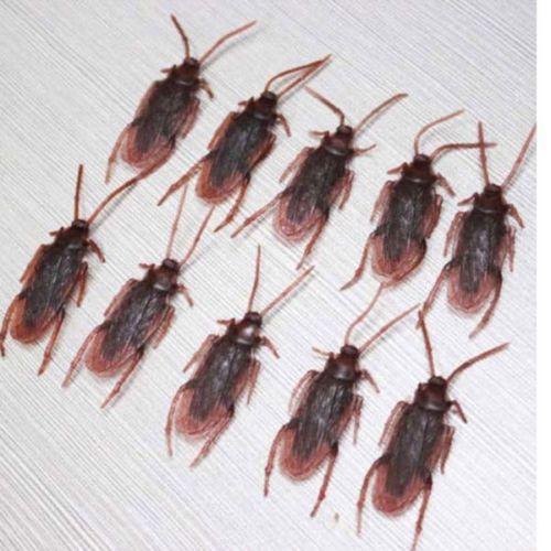 Hot Fun 10pcs Brand New Realistic Simulation Vivi Cockroach Plastic Rubber Roach Bug(China (Mainland))