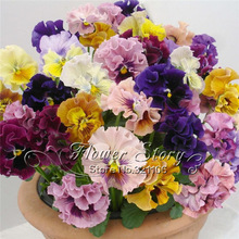 1 pack 30 beautiful pansy seeds Mix Color Wavy Viola Tricolor Flower Seeds bonsai potted DIY home&garden original packing A090
