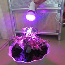 28 Red 10 Blue 220-245V Energy Saving Light E27 38LED Plant Grow Light Bulb Garden Hydroponic Lamp(China (Mainland))