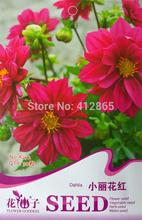 Venda quente 50 PCS vermelho dálias sementes de flores perenes para DIY jardim de para o presente(China (Mainland))