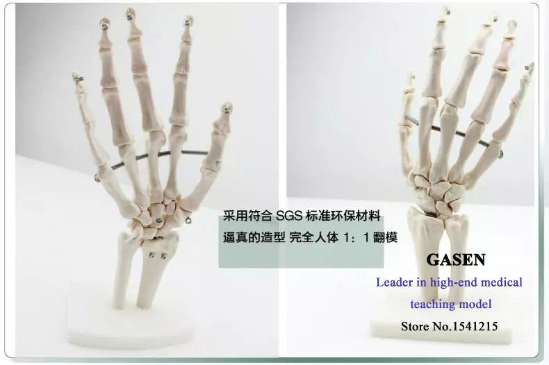 человеческих кастет кость