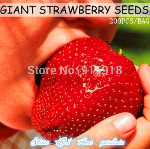 Fruit seeds 200pcs Super Giant Strawberry perfume bonsai strawberry fruit, home gardening DIY(China (Mainland))