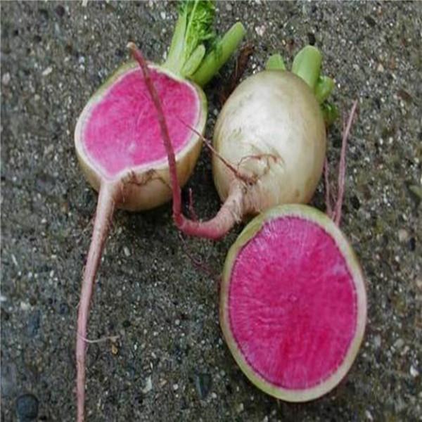 Radish Seeds Growth Hearts Fairy Radish Seeds