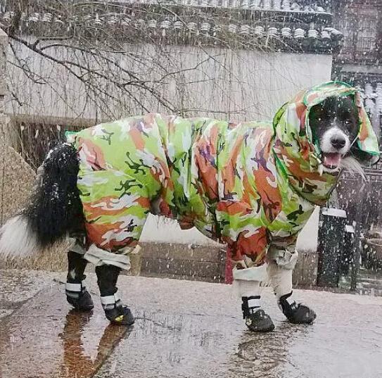 Новый плащ собака pet Одежда водонепроницаемая одежда собак одежда Толстовки для животных летом и весной ПЭТ сиамские плащи ноги