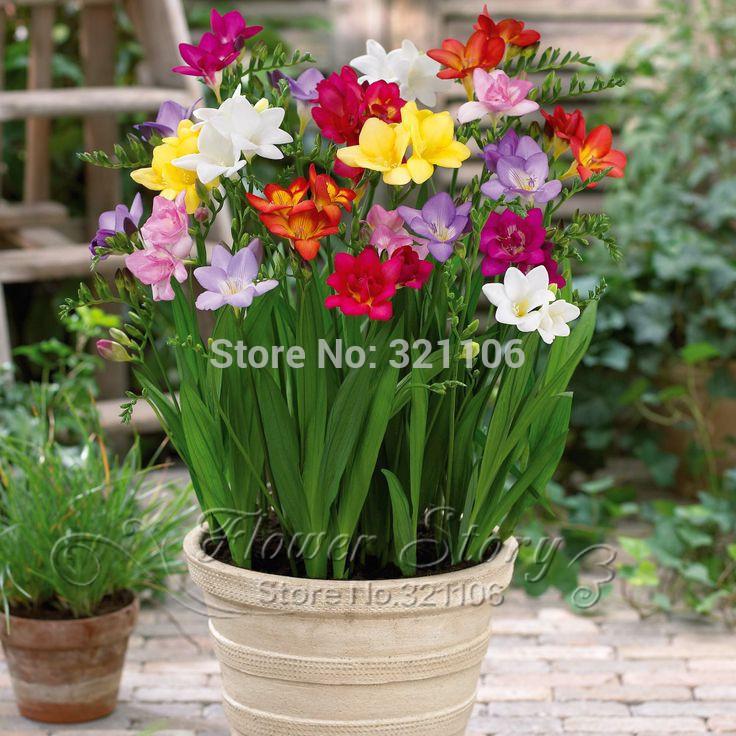 Comparer les prix sur freesia garden online shopping for Plante decorative jardin