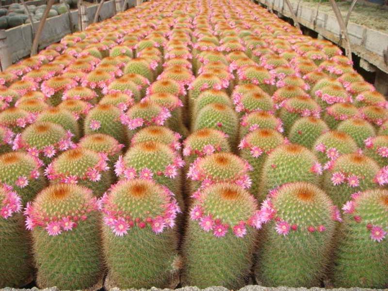 mini jardim de cactus:mini cactus, plantas, em Bonsia de Casa & jardim no AliExpress.com