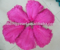 "wholesale FREE SHIPPING 500pcs/lot 10""-12""Ostrich Feather Plume"