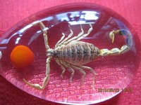 scorpion amber car car keyring