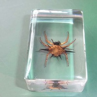 Natural Insect Specimen Real Insect Amber Lucite Sample Spiny Spider 45mm*30mm*17mm High Quality The Best Collection