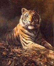 popular tiger oil painting