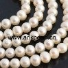 E.lindner sample order- Pearl necklace & shell pearl studs(China (Mainland))