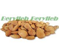 Free Shipping 1kg  Fresh Bitter Apricot Kernels Organic
