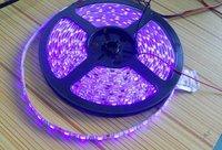 5m Purple color flexible LED Strip;5050 SMD;60LEDs/m,waterproof by epoxy coating;DC12V input