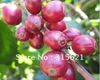 Free Shipping 500g Green  Raw Coffee Beans  Grow On 1800M China YUN NAN Plateau(China (Mainland))