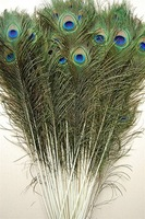Wholesale Price! 200pcs/lot, length:25-30 cm,beautiful natural peacock feather!