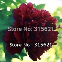 Free Shipping Beautiful Dark-purple Peony Flower Seeds  50pcs/pack