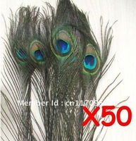"Wholesale - Peacock Tail Feathers 50pcs 8""-12"""