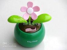 wholesale flip flap plant