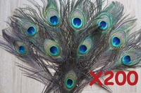 Big Eyed Peacock Tail Feathers / Natural State Top Quality Peacock Feather 200 pcs per lot.