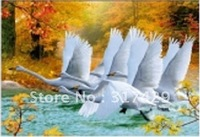Good Quality 25*35cm HD PET Lenticular 3D Picture, 3D lenticular home decoration pictures,Without frame Free Shipping-Swan