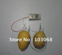 Hot Sale Science Museum POTATO CLOCK Vegtable Power Brand NEW Wholesale Lots OF 72