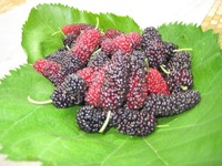 2014 New Arrival Hot Sale Freeshipping 1 Kg Dried for Mulberry, Morus Fruit Fructus Mori Alba L Multicaulis Bombycis