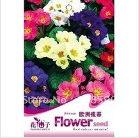 Primrose flower Seeds for garden**for europe Spring** 50 pcs of Seeds per Bag,5 bags per lot